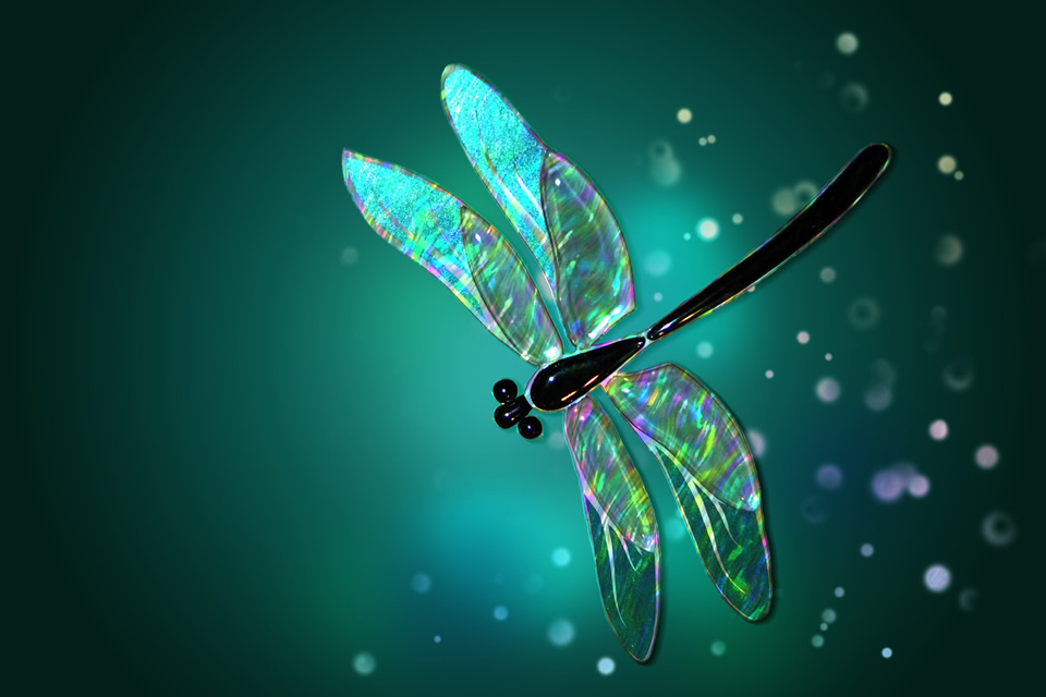 Personal Transformation: The Lesson of the Dragonfly